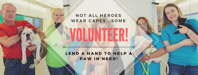Volunteer banner for web