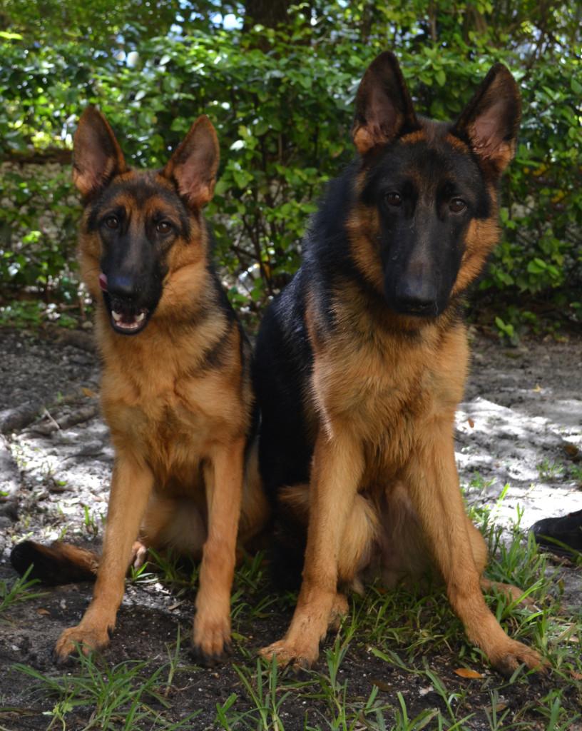 Koni and Kona