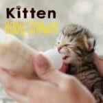 Kitten_BBS
