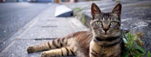 communitycats_slider
