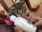 Kitten bottle