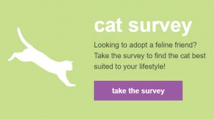 Cat Survery Link Image