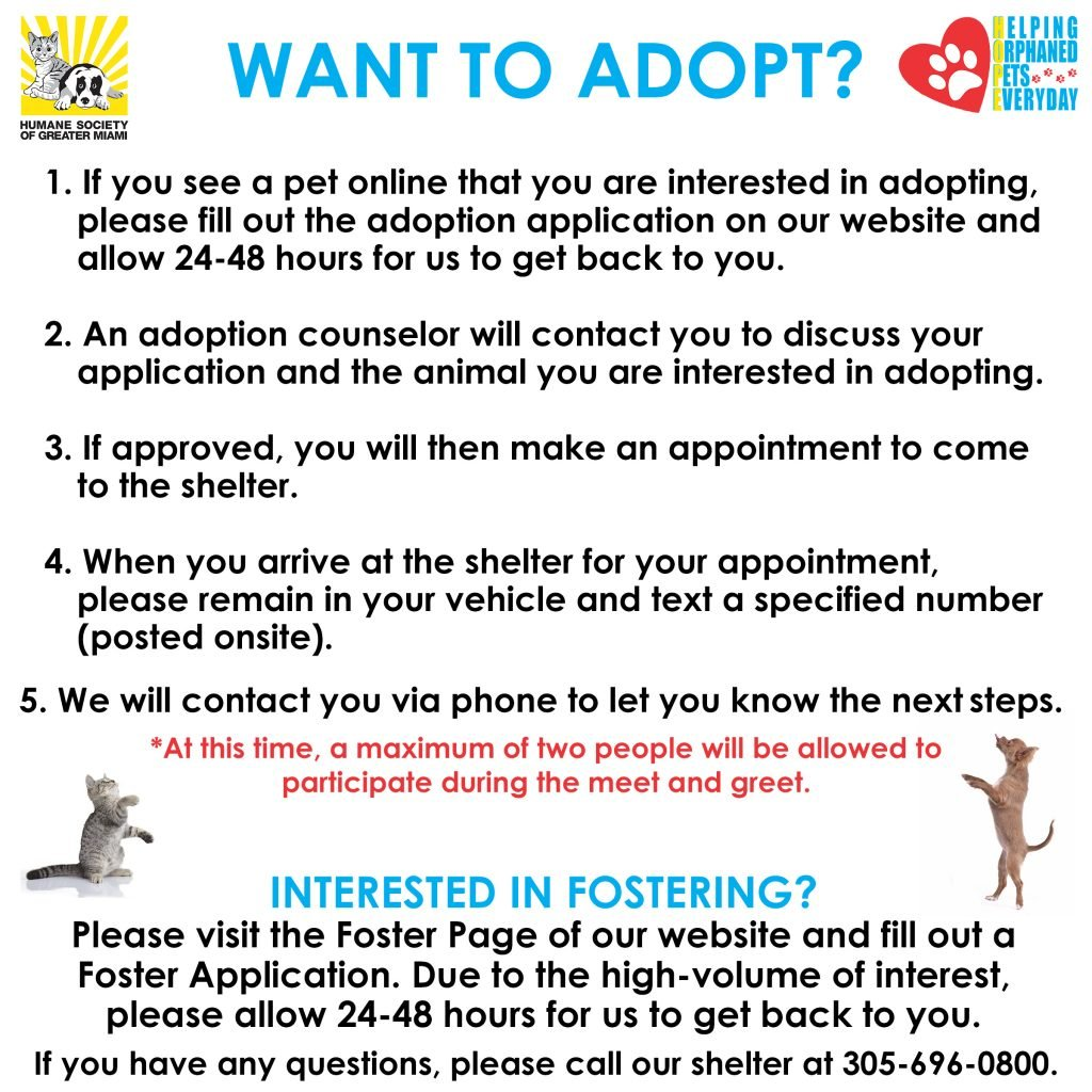 Adopt and Foster Graphic