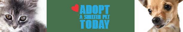 Adopt a Shelter Pet Banner thin