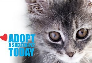 Adopt a shelter pet today_cat 2000px