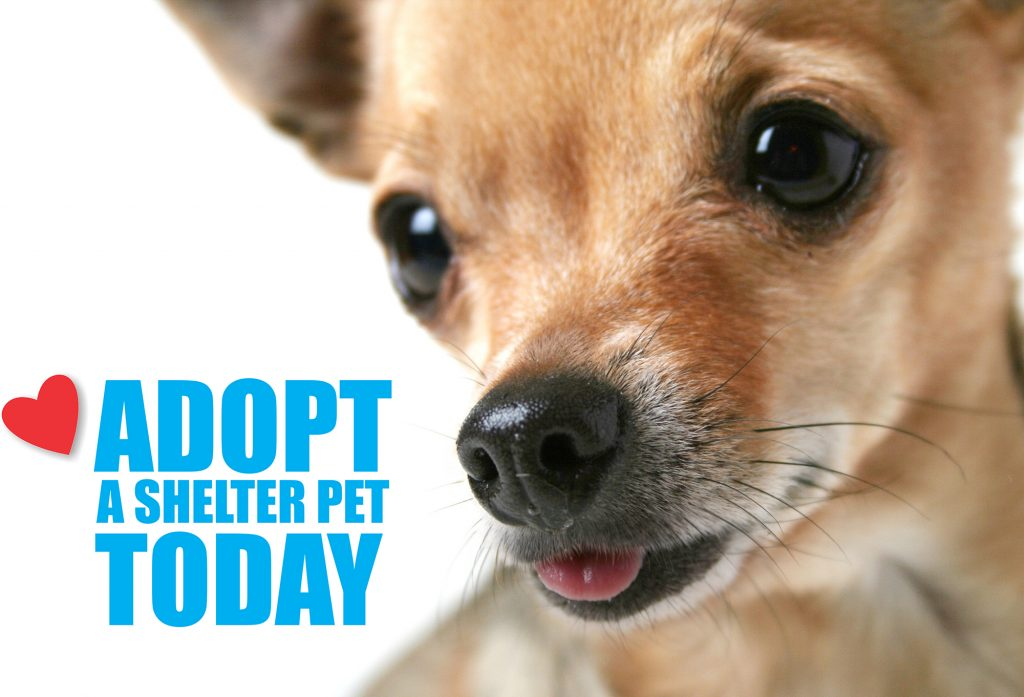 Adopt a shelter pet today_dog 2000px