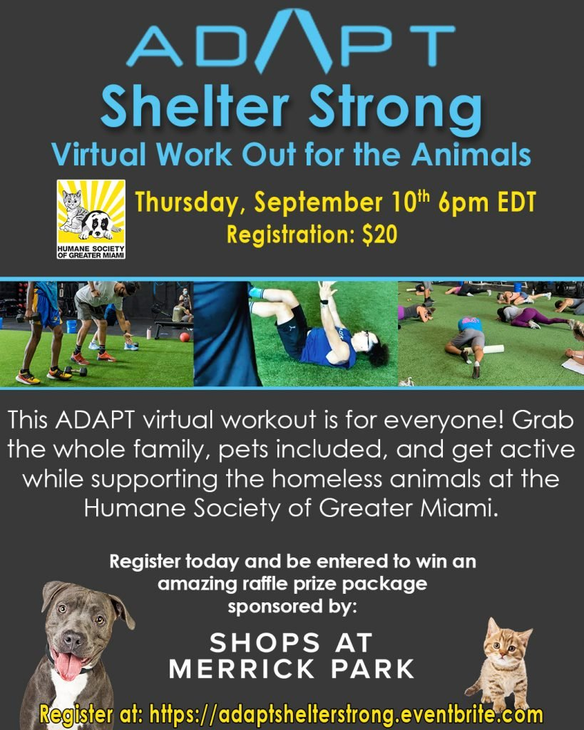 Adapt Shelter Strong flyer