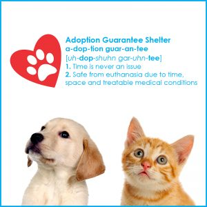 Adoption Guarantee square min