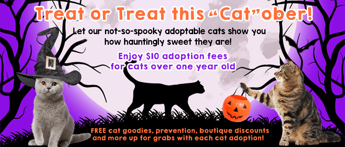 Treat or Treat – FB and Website Banner